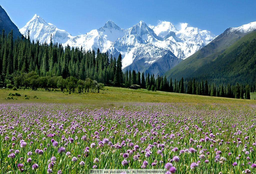 新疆 昭蘇夏塔風光 花 草 樹 雪山 野花 小草 樹木 自然景觀 自然風景