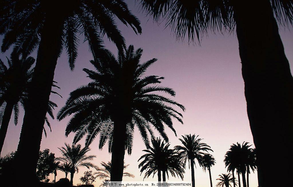 蓝天树木 自然风光 自然景观 自然风景 树林 白云 南方景观 夕阳西下