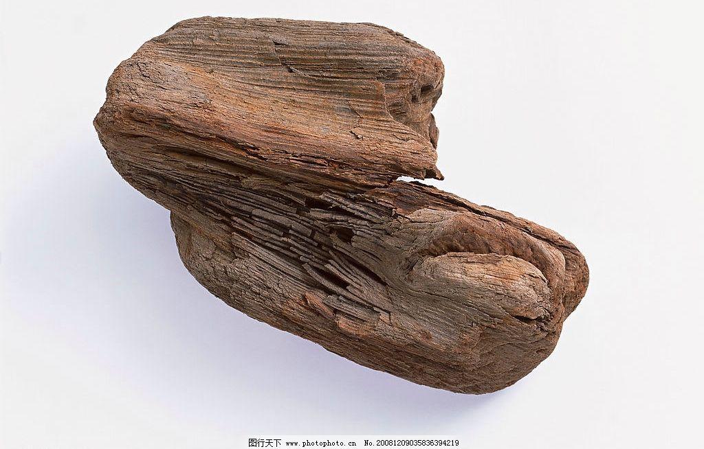 枯树枝 生物世界 树木树叶 摄影图库 350dpi jpg