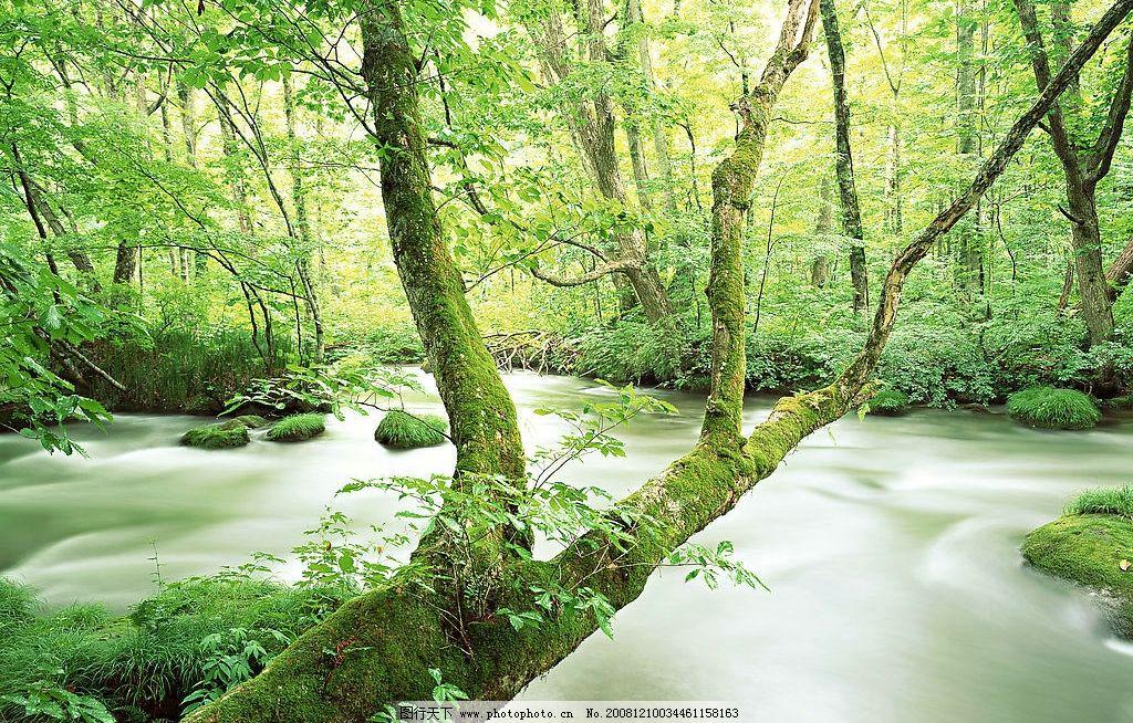自然 清溪 水 树木 树叶 森林 树干 青苔 小树 小草 手绘画 自然景观