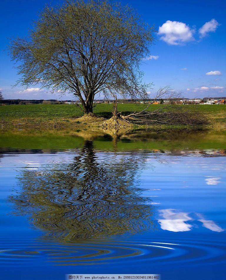 河边小树 河边 小树 倒影 涟漪 蓝天 白云 自然景观 自然风景 摄影