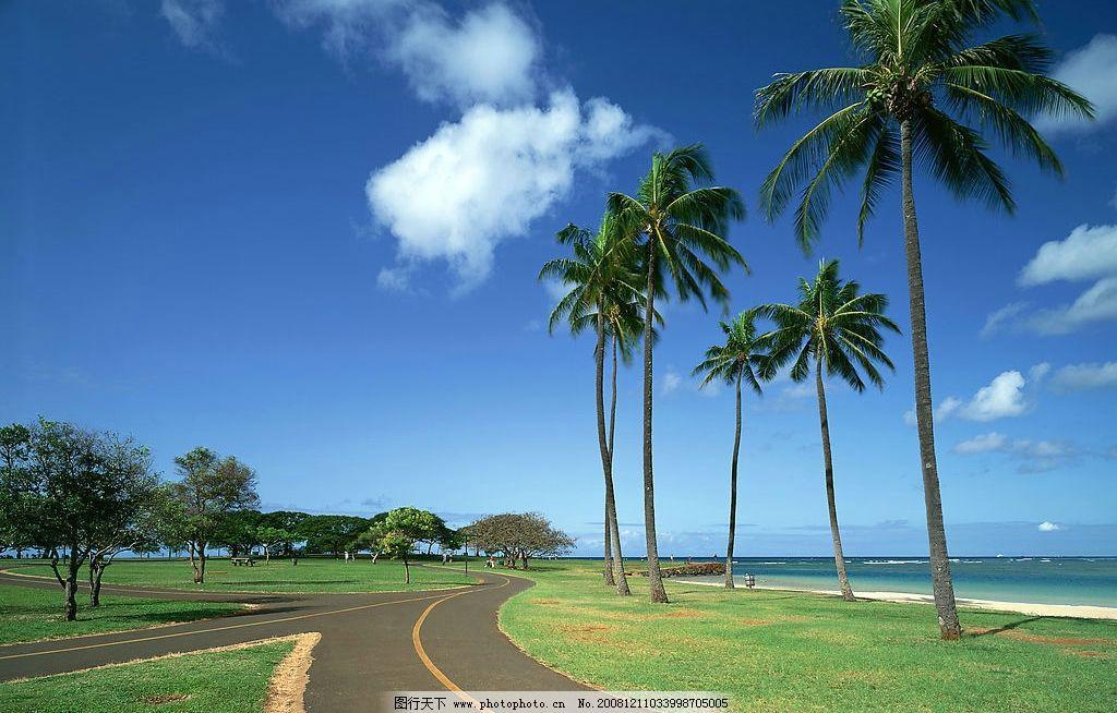 海南风光 风景 椰树 海南 海岸 小路 旅游摄影 国内旅游 摄影图库 350