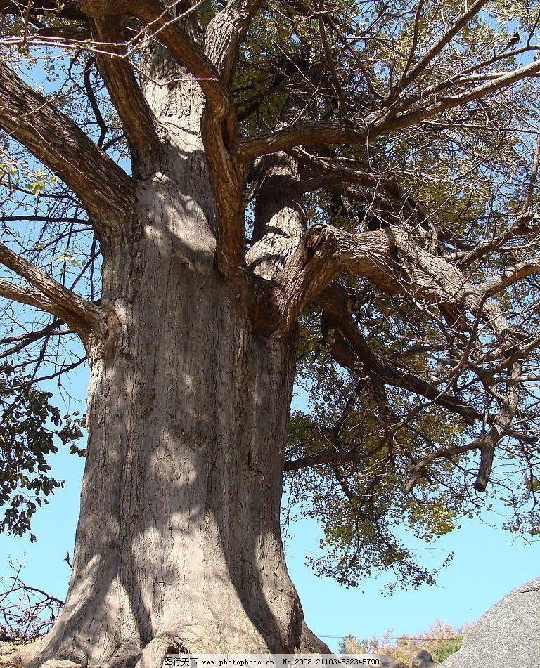 大树 大树底下好乘凉 西峡风光 蓝天 鸡角尖 树根 树阴 影子