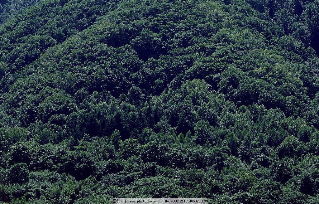 原始森林图片_自然风景