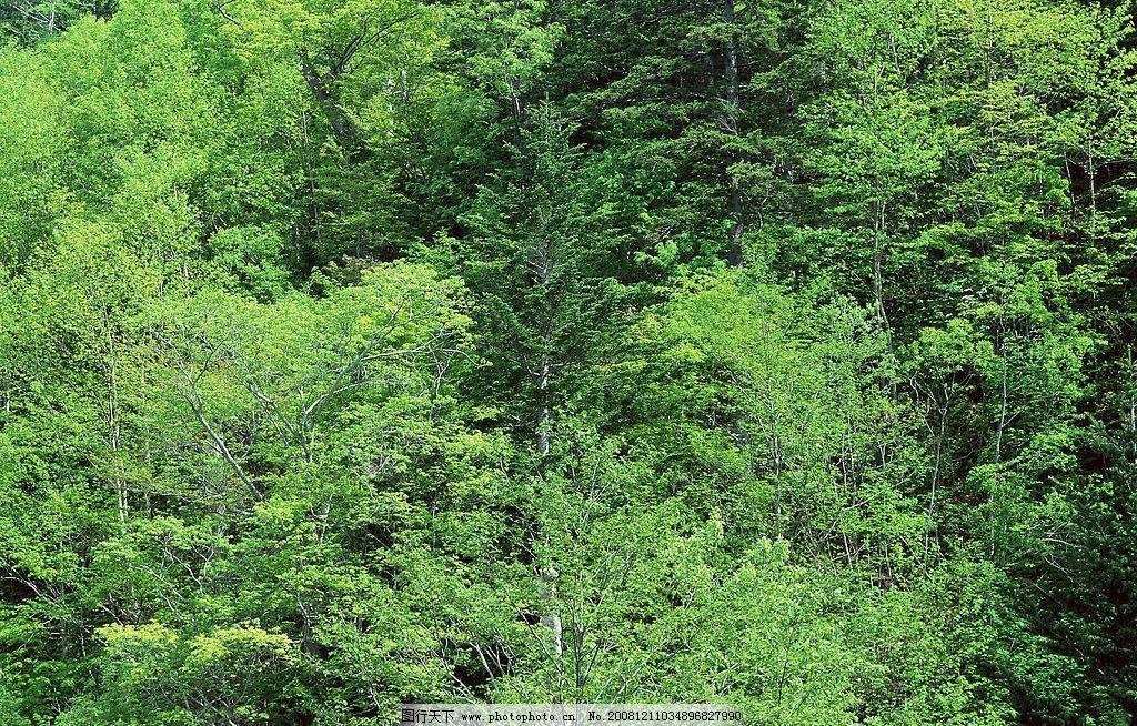 原始森林图片_自然风景图片