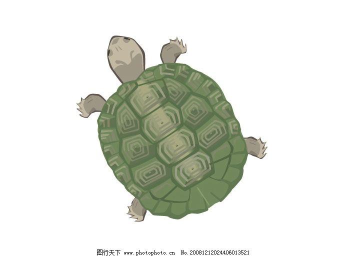 乌龟 乌 龟 生物世界 野生动物 矢量图库 ai