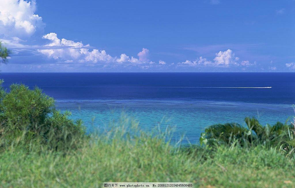 蓝天白云草丛 海边 草丛 海滨 热带风情 植物 海边风光 海岸 自然景观