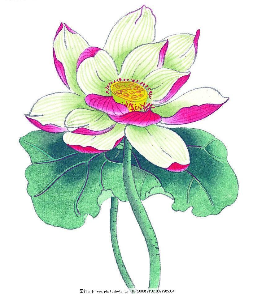 荷花 莲花 荷叶 花朵 花卉 植物 国画 艺术