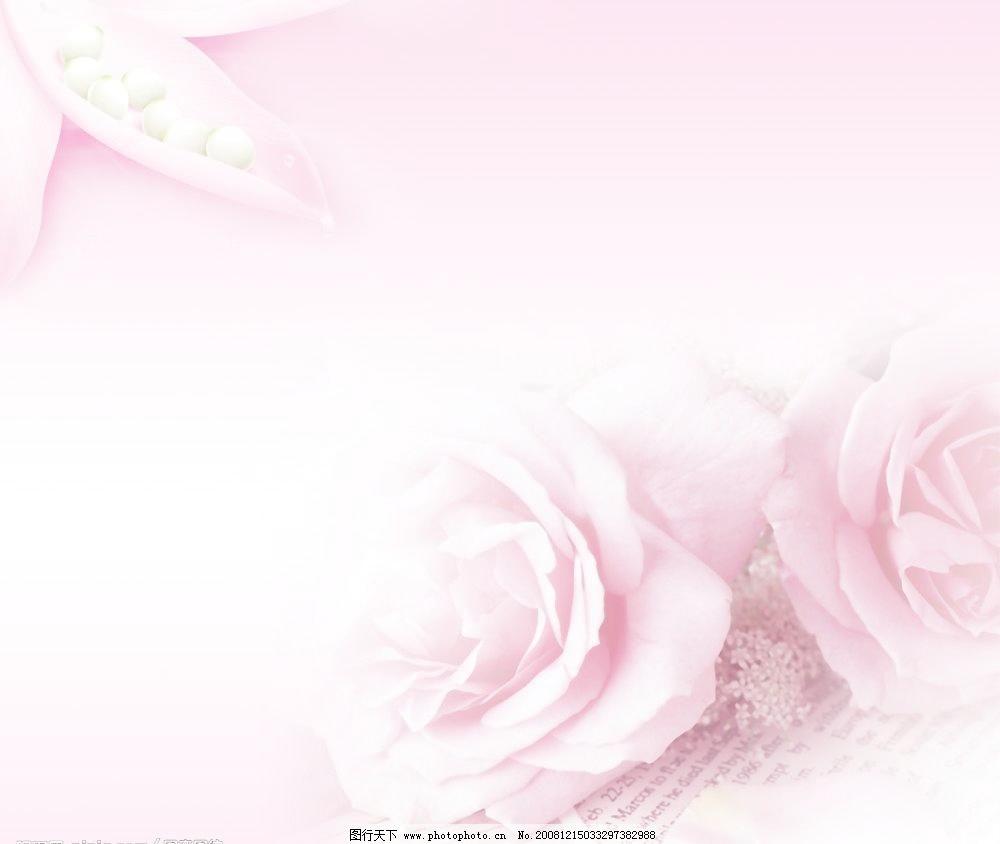 psd分层素材 背景 粉色 浪漫 玫瑰 美图 温馨 温馨背景 温馨背景素材