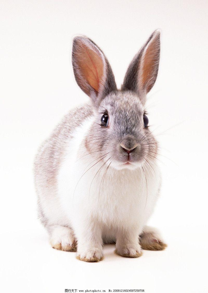 壁纸 动物 兔子 800_1127 竖版 竖屏 手机