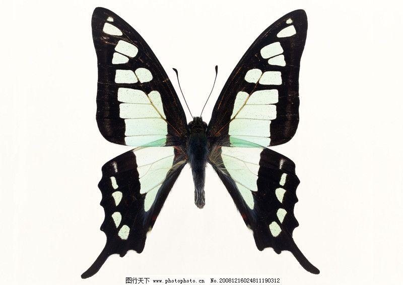 蝴蝶网盘资源