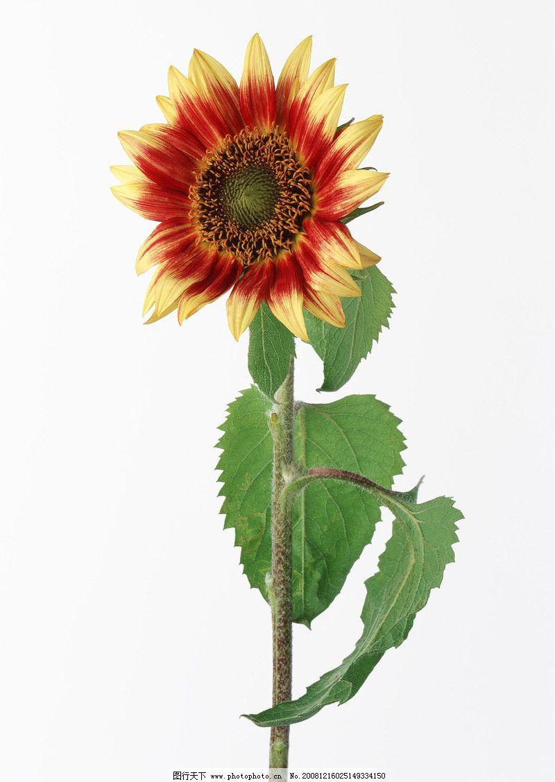植物 花卉造型