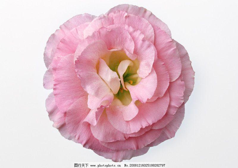 花卉造型0069 植物