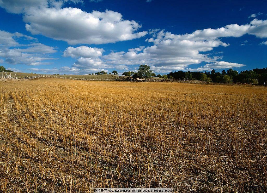 收割后的麦田 蓝天 白云 大地 树木 高清 风景摄影 自然景观 田园风光