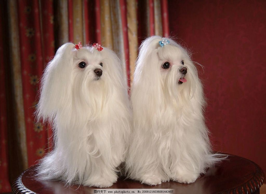 两只可爱的狗图片