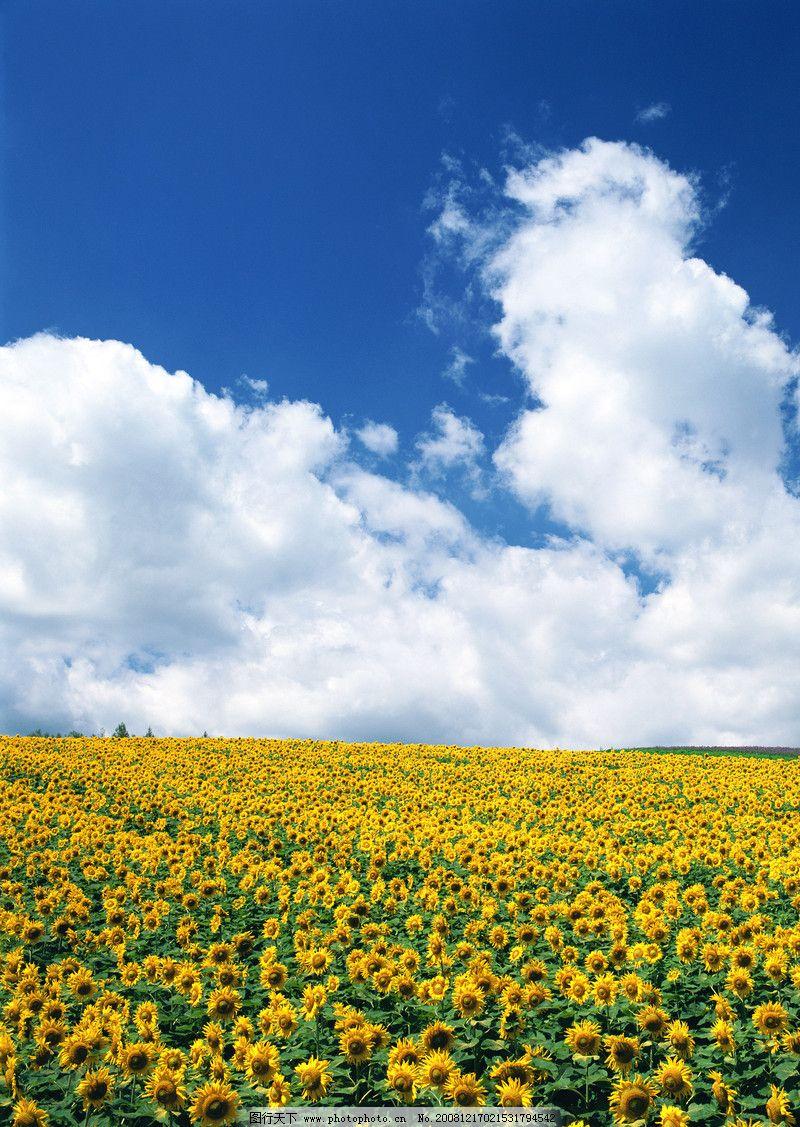 百花盛景0117 自然风景
