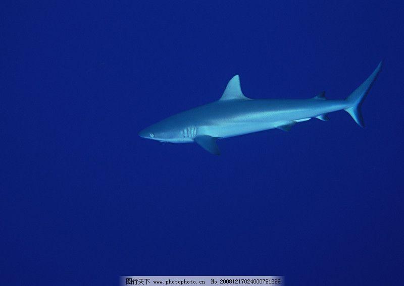 深海潜玩0118 自然风景