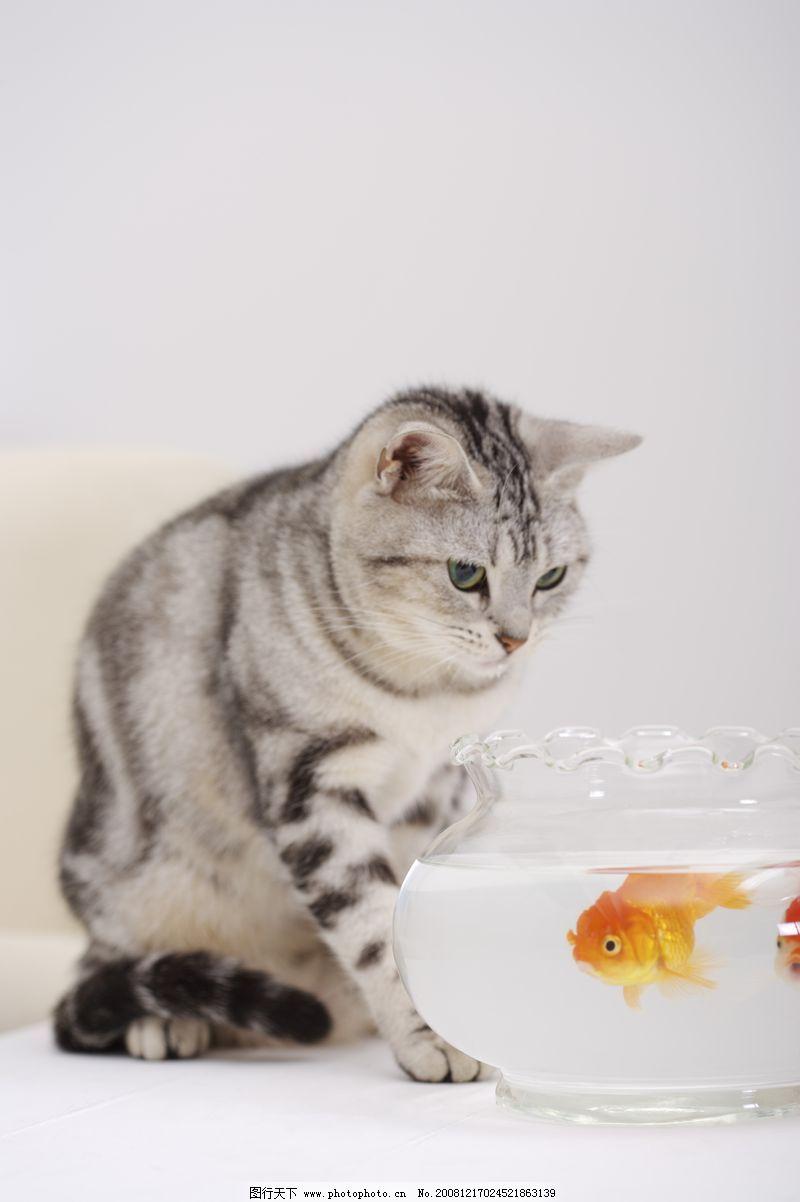 猫和老鼠0041 动物