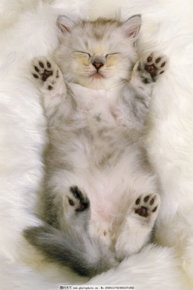 壁纸 动物 猫 猫咪 小猫 桌面 800_1200 竖版 竖屏 手机