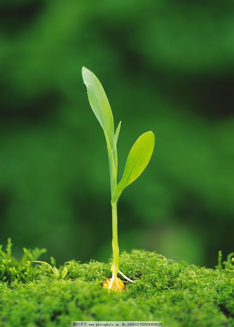 钩针绿芽盆栽图解
