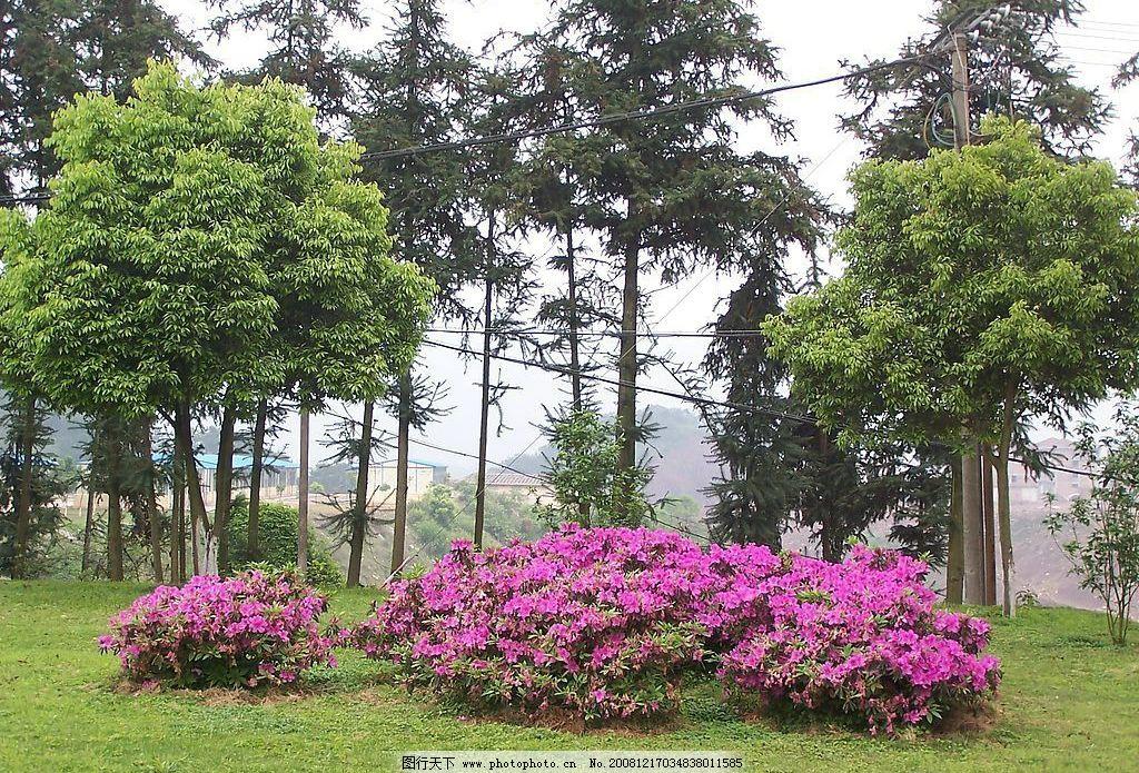 杜鹃花 自然景观 自然风景 摄影图库 230dpi jpg