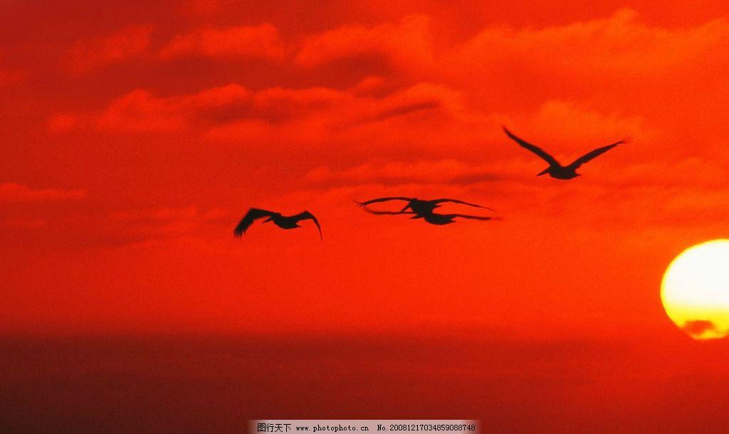 红色天空 飞鸟 天空 小鸟归巢 夕阳 晚霞 自然景观 自然风景 摄影图库
