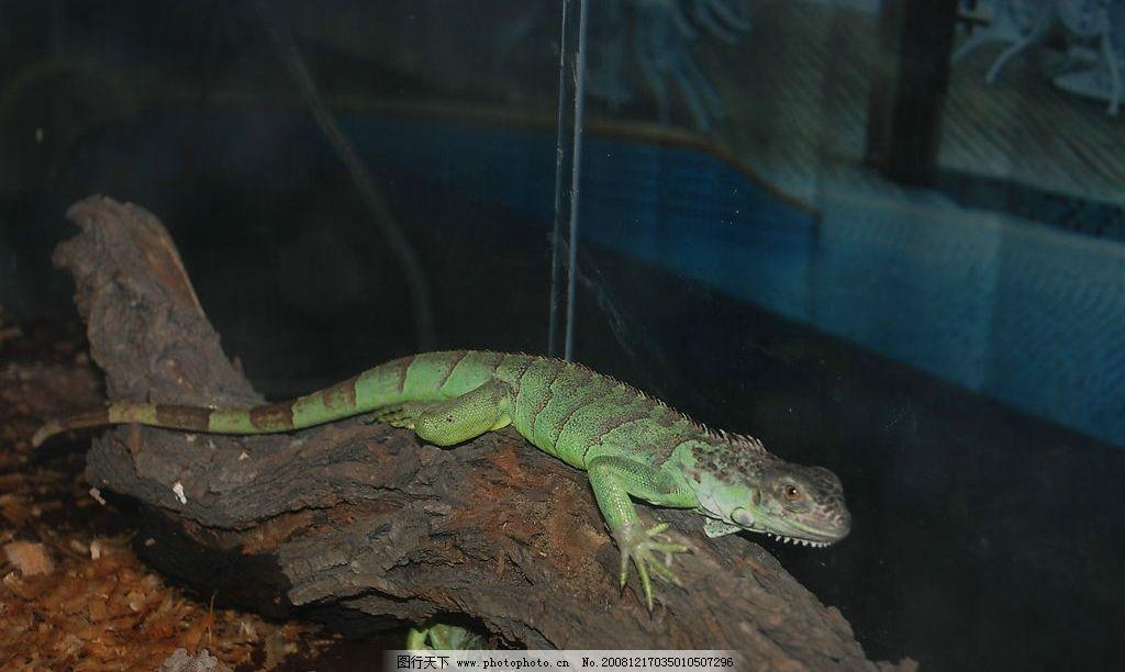 蜥蜴 生物世界 野生动物