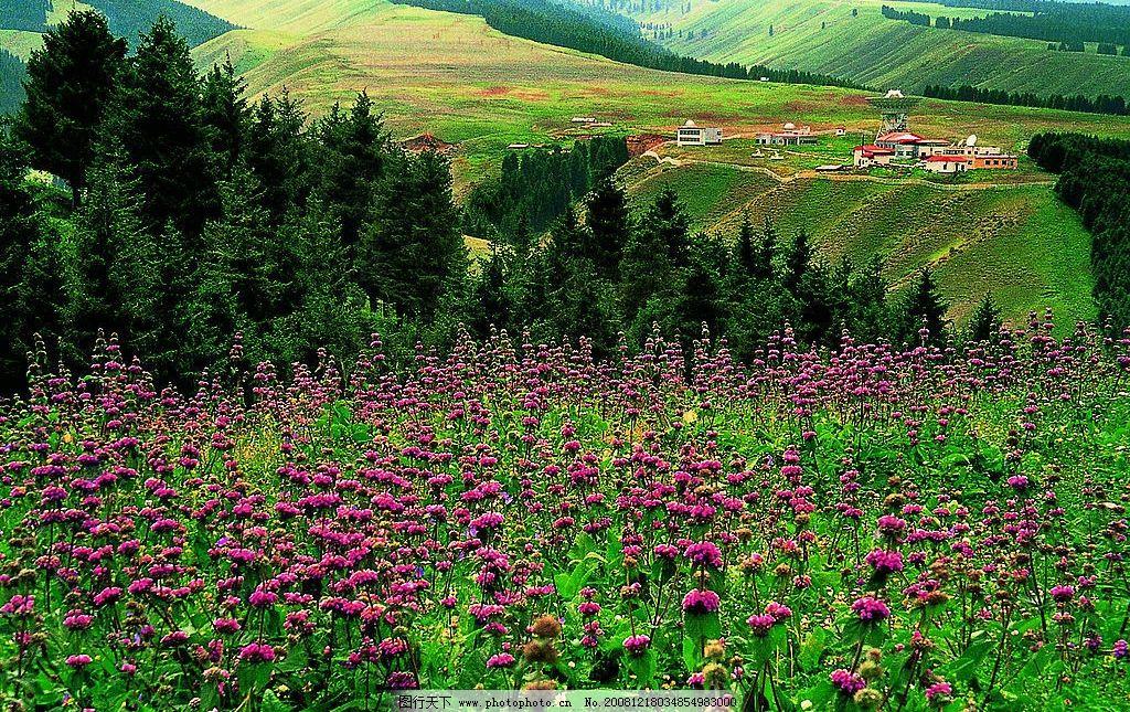 乌鲁木齐南山图片_自然风景_自然景观_图行天下图库
