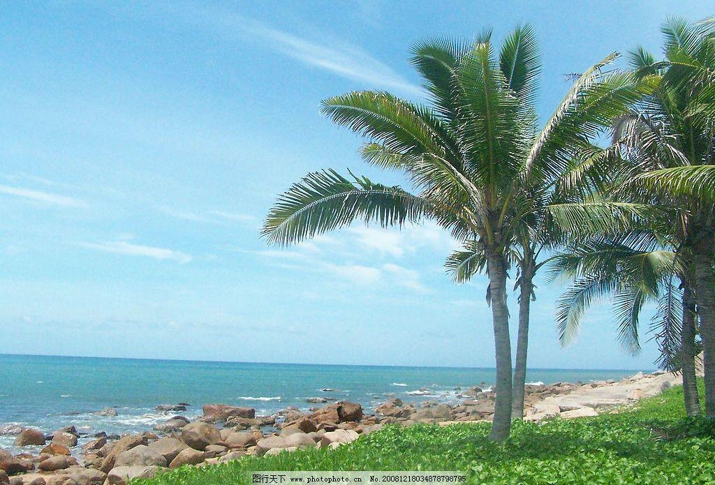 海南岛 海南 海水 椰树 夏天 蓝天 自然景观 自然风景 摄影图库 230