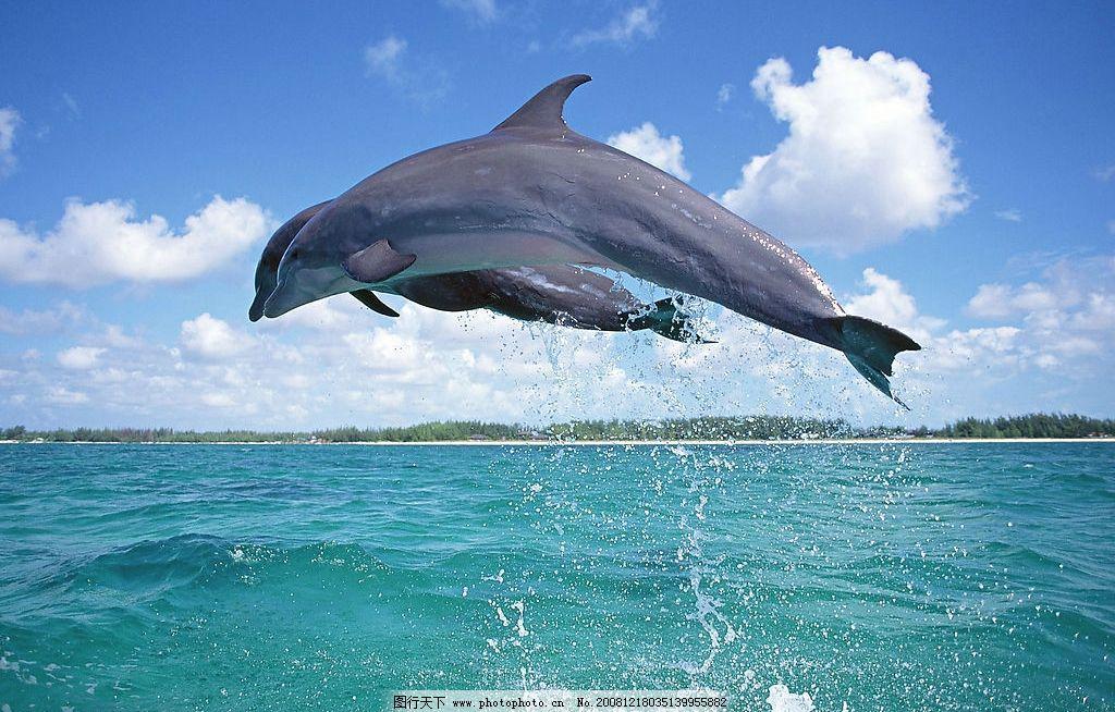 壁纸 动物 海洋动物 桌面 1024_654