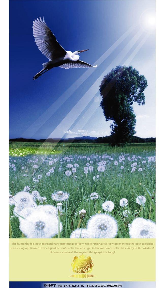 美丽风景图之鹰击长空图片