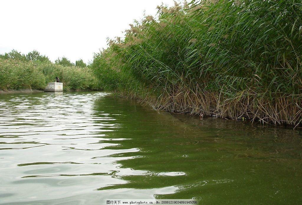 芦苇 湖水 自然景观 自然风景 摄影图库 300dpi jpg