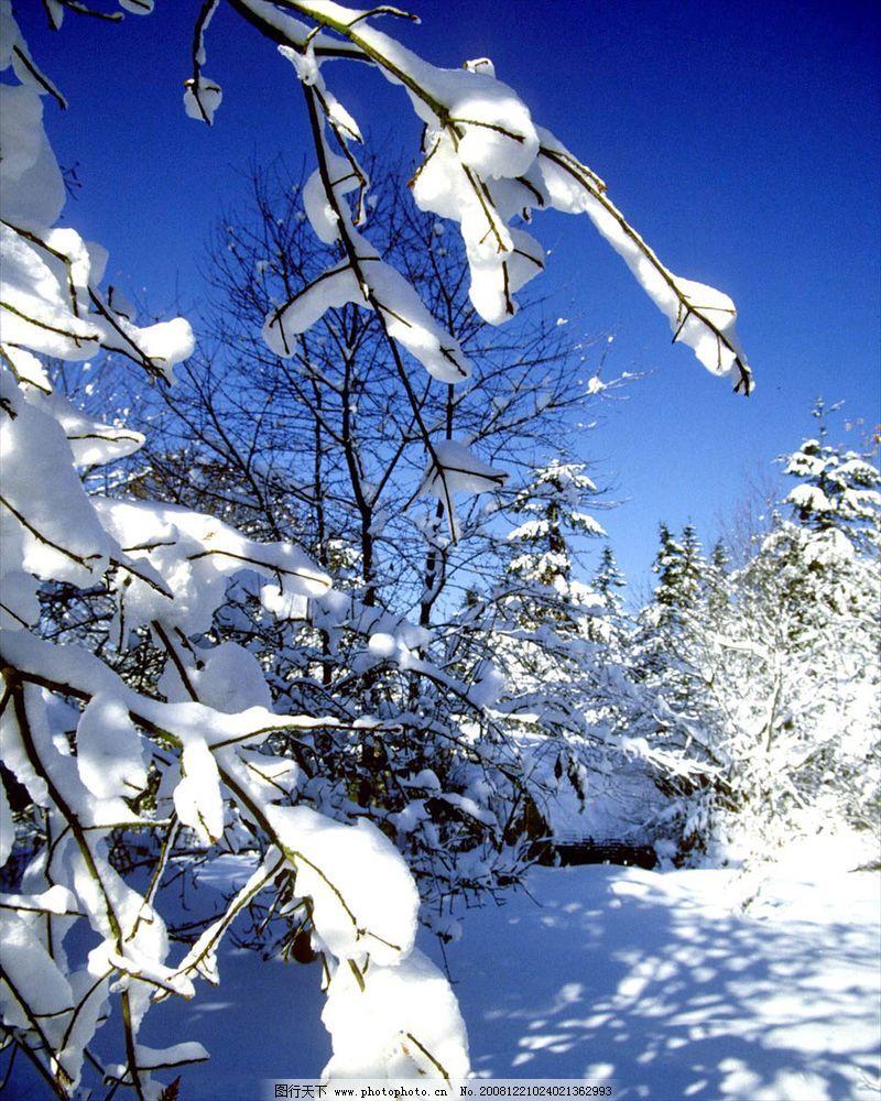 自然风景 雪铺大地