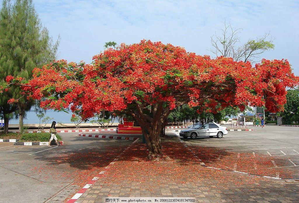 花树 树 花 旅游摄影 自然风景 摄影图库 72dpi jpg