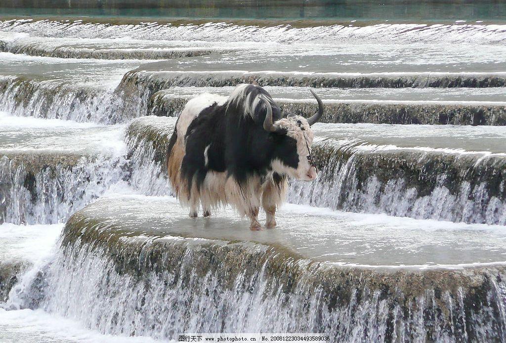 山水风景头像动物清楚