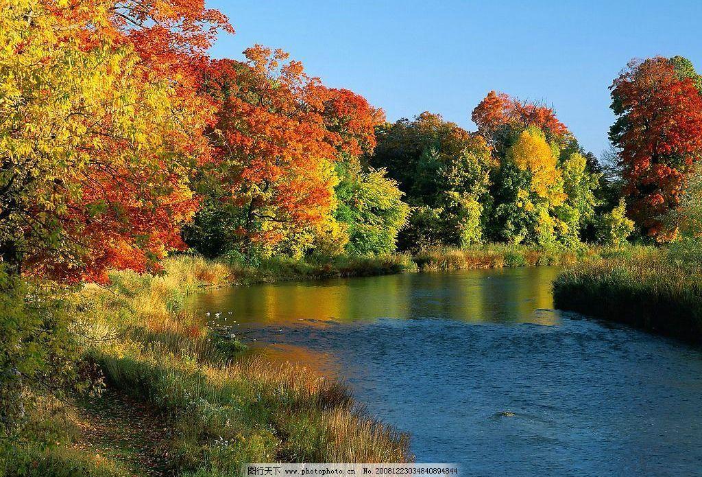 风景 河边 树林 秋天 河边的树 摄影图库