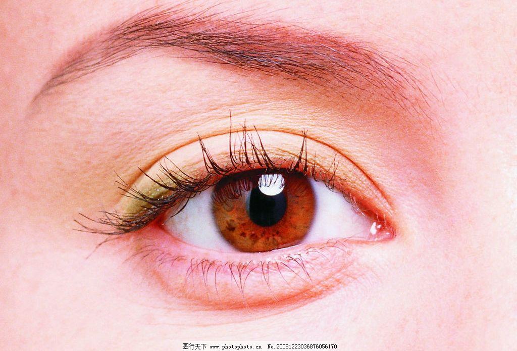 眼睛 眼 眼球 人体器官 眉毛 睫毛 眼部 人物图库 其他 设计图库 200