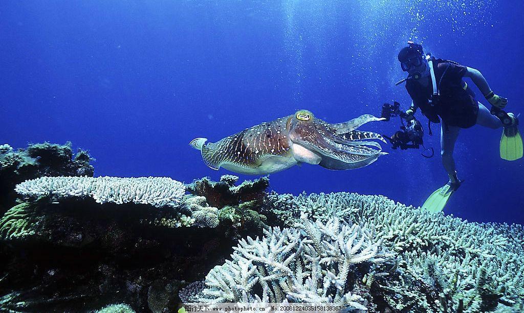 海底世界 人 海底生物 乌贼 鱼 生物世界 海洋生物 摄影图库