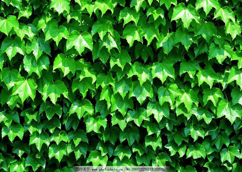 自然风景 植物背景
