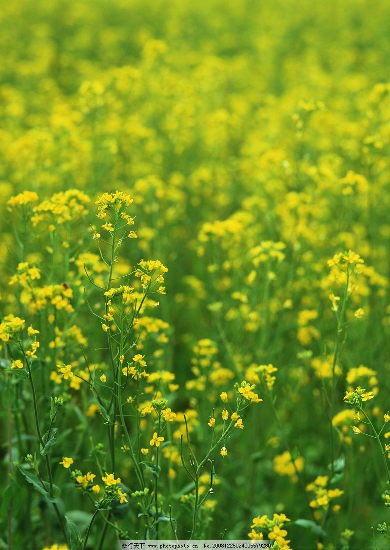 自然风景 鲜花遍野