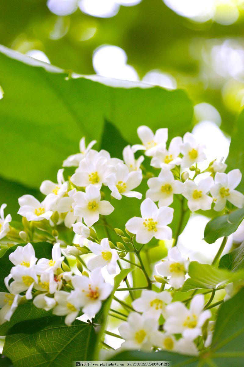 自然风景 白色纯净花