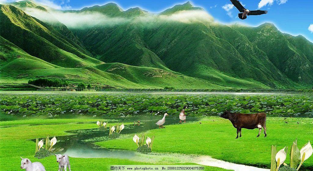 荷花 荷叶 蓝天 白云 青山 山 水 牛 羊 鸭 鹅 花 草地 风景 鹰 环境