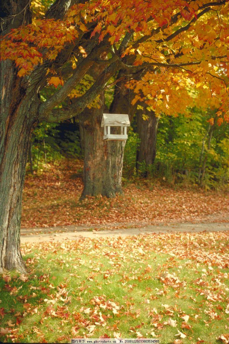 壁纸 风景 森林 桌面 800_1201 竖版 竖屏 手机