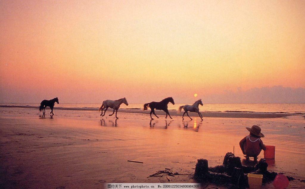 黄昏的海边 黄昏 海边 日落 晚霞 夕阳 奔马 艺术 文化艺术 美术绘画