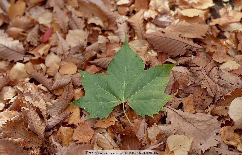 落叶归根图片 自然风光 自然景观 自然风景 森林素材 落叶 树木 树根