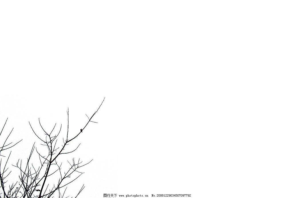 树枝 天空 蓝天 白云 风景 冬天 冬天的树枝 前景树 纯白背景 背景