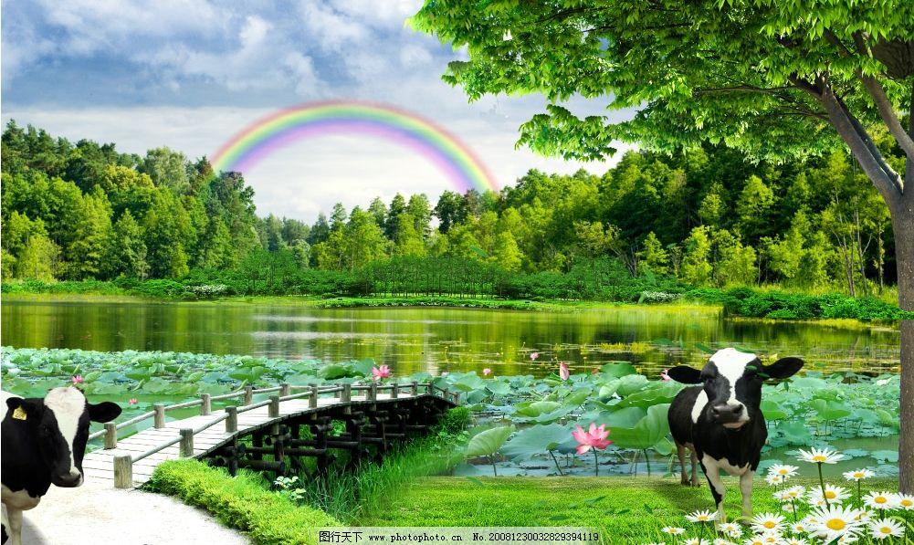 彩虹 风景 池塘 鱼 牛 木桥 荷花 草地 林木 风景树 自然景色 山村