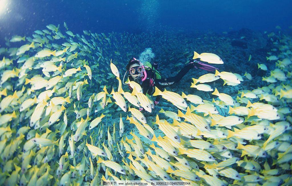 自然景观 海水 海洋 潜水人员 海底世界 海洋生物 海底 潜水 各种鱼类